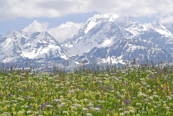 Prairies fleuries Natura 2000 Adrets de Tarentaise