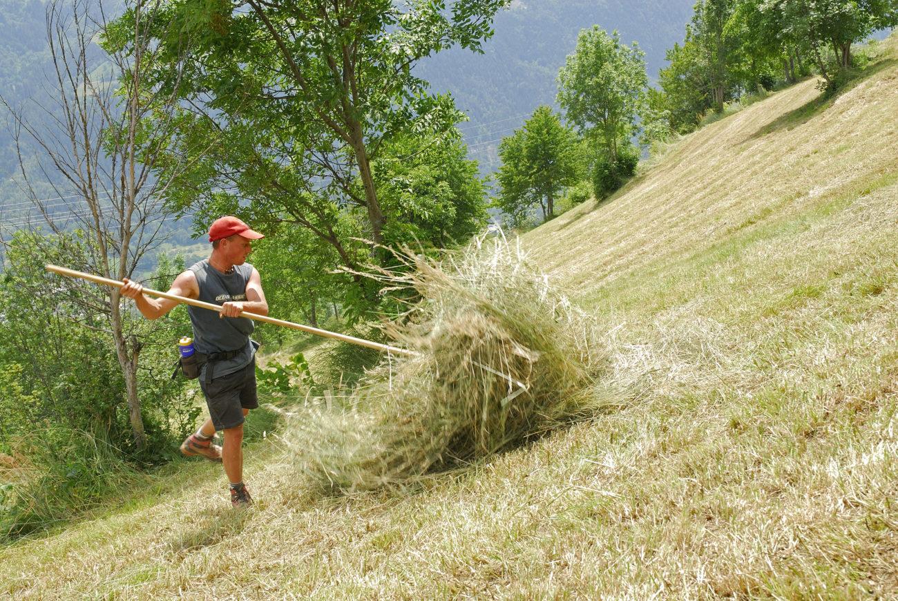 Le « projet agro-environnemental et climatique » : retours sur les contractualisations agricoles en Tarentaise